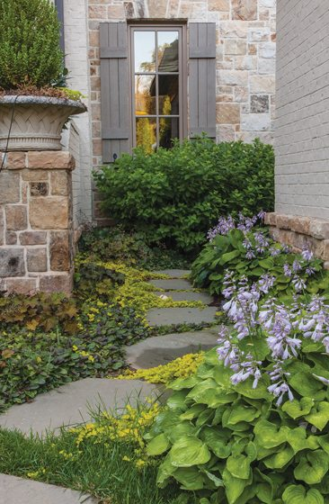 Purple-flowering hosta halcyon lines a path leading to the rear garden.