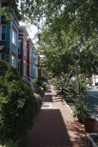 Bloomingdale's tree-lined streets. Photo Kal Naga