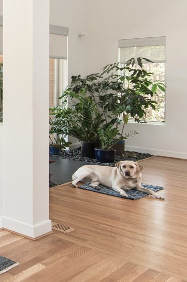 In the living room, the family dog, Cooper, lies near potted plants on a bed of stones that brings the outdoors in.