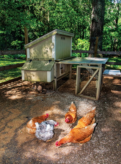 """Meanwhile, the """"girls""""—Ethel, Lucy, Mary, Rhoda and Baby—consistently reward their owners with fresh eggs."""