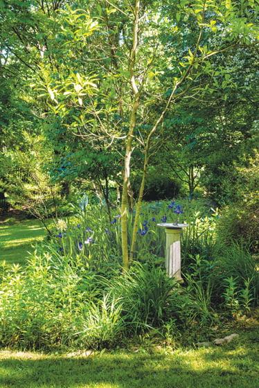 Irises surround a sundial in the backyard.