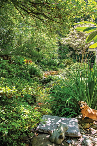 Manfred, the couple's pug-dachshund mix, guards the koi pond.
