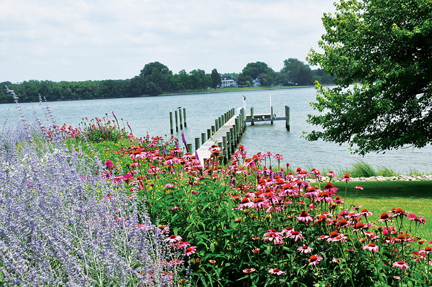Russian sage and coneflowers provide a vibrant backdrop to the dock on the Miles River.