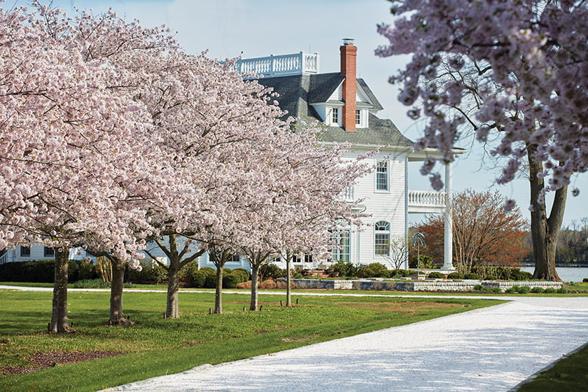An allée of cherry trees lines the long approach to this riverfront property in Easton, Maryland. © David Burroughs
