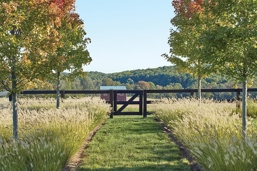 A mock windbreak of red maples focuses attention on a vintage red-painted shed in an adjacent pasture.
